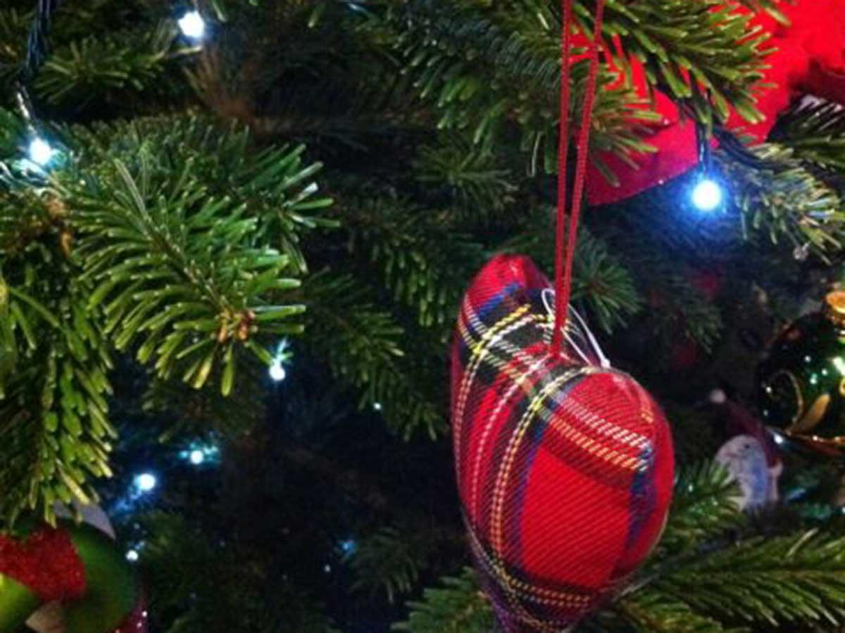 Dd Christmas.Christmas Tree Farm Pentreclawdd Farm Oswestry