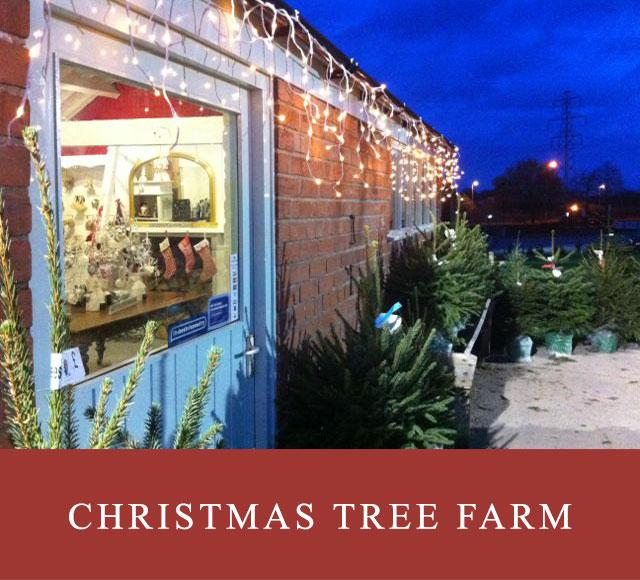 Christmas Tree Farm & Shop